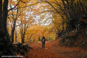 Colourful beech trees