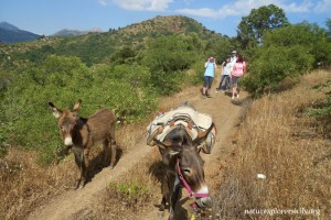 Passeggiata con l'asino - Walk with donkeys